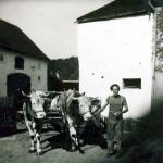 ss3 mit Kuhstall rechts kri 600