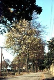 Herbstidylle in Einsiedel