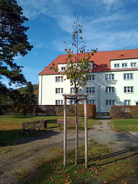 Luther-Linde Einsiedel 2019