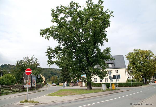 Luthereiche Einsiedel 2006