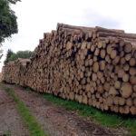 Holzstapel an der Eibenberger Straße - Bilder vom Tage
